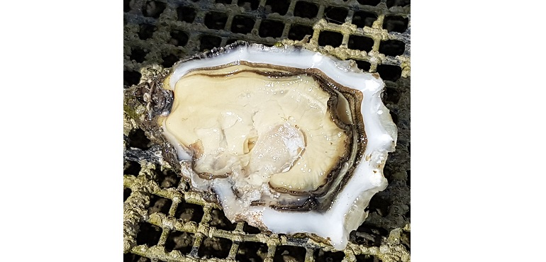 Web-Rooney-Oysters.jpg
